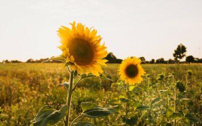 Sun Damage … or, Sun Healing?
