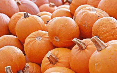 Pumpkin Pie in a Bowl