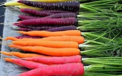 The Carrot Trick